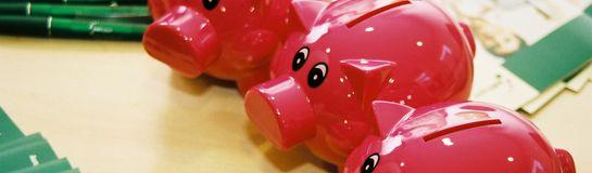 Schweinchen 546x160