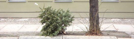 Weihnachtsbaum2 546x160